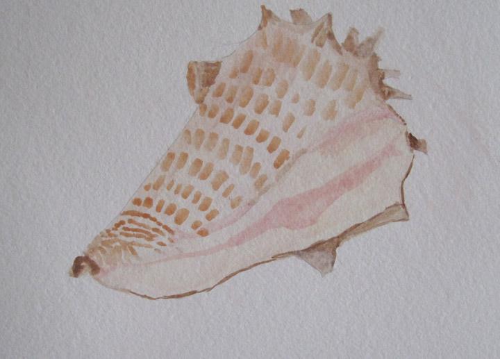 Karin - Conch Shell