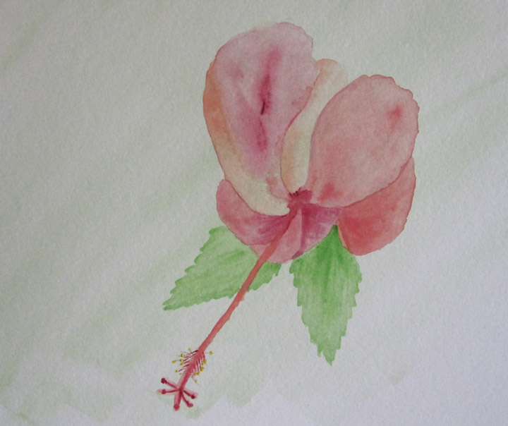 Hibiscus Bloom - Deb