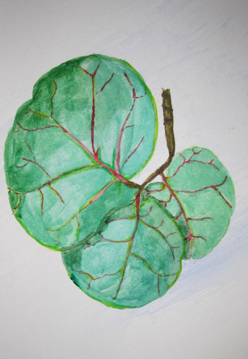 Seagrape Leaves - Karin