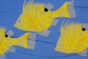 Juvenile Hogfish 2