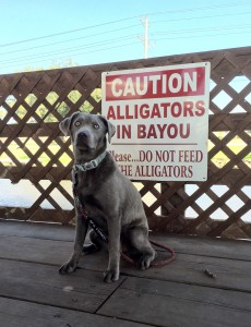 Andi keeping watch for alligators! At the Bayou Delight Restaurant.