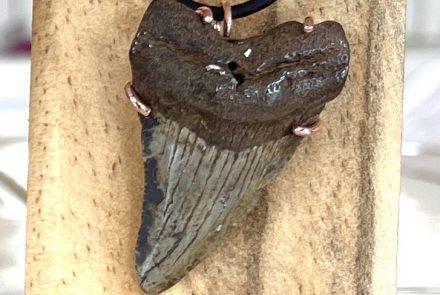 Fossil Shark Tooth Pendant – Megalodon!